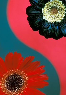 Blumen im Kontrast