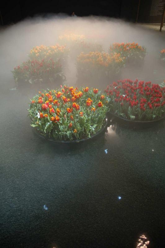 Blumen im Nebel