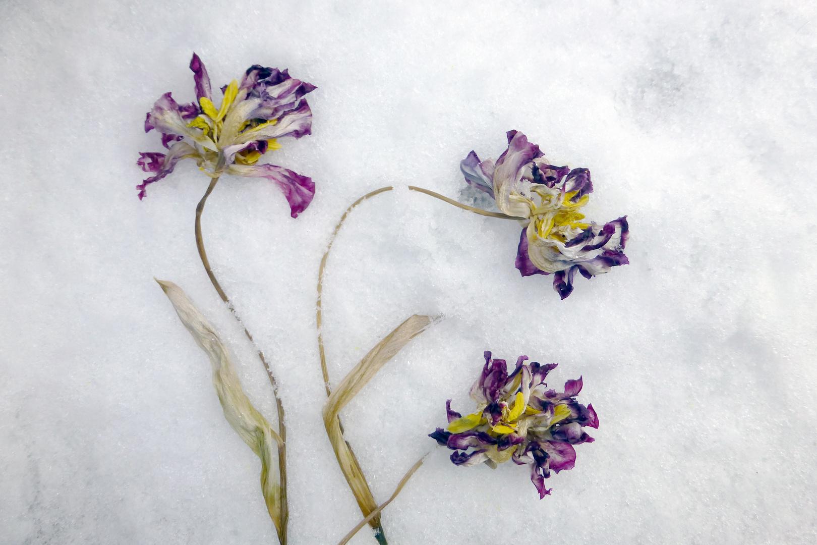 Blumen im Schnee
