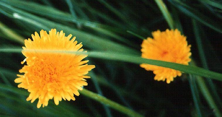 Blumen im Schutz der Wiese