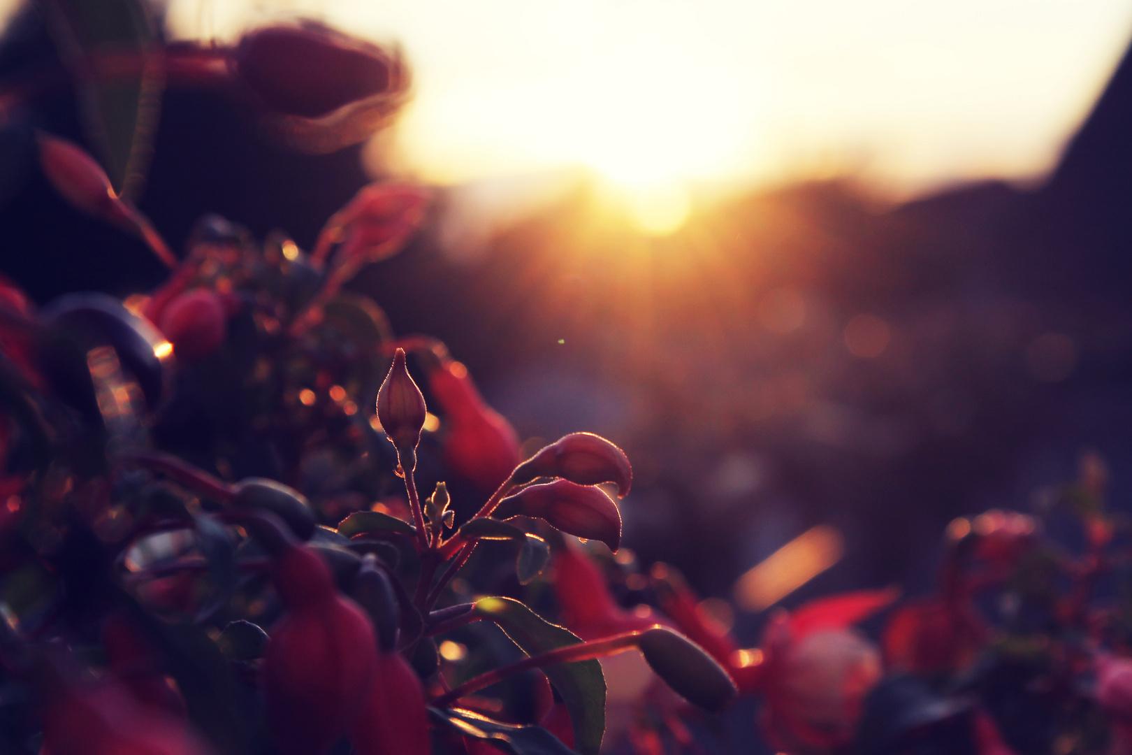 Blumen im Sonnenuntergang
