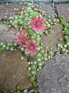 Blumen im Stein