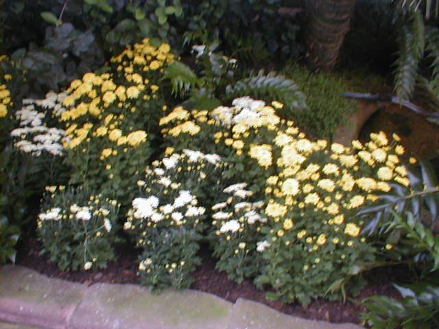 Blumen im Stuttgarter Zoo