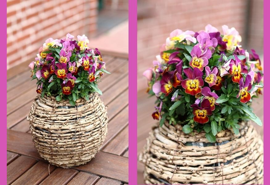 Blumen im Topf