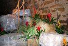 Blumen im Tunnel