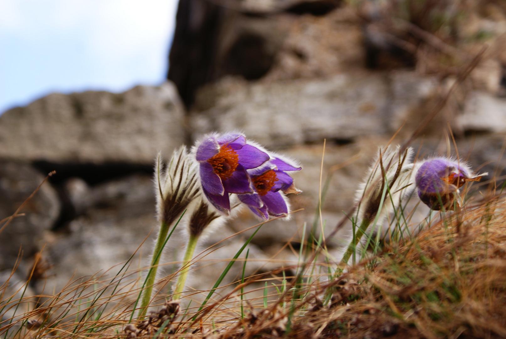 Blumen im Wind