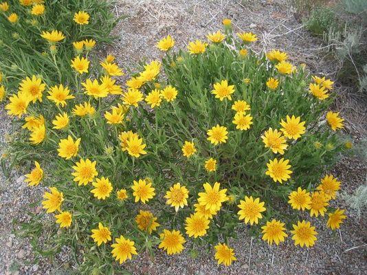 Blumen in Arches National Park