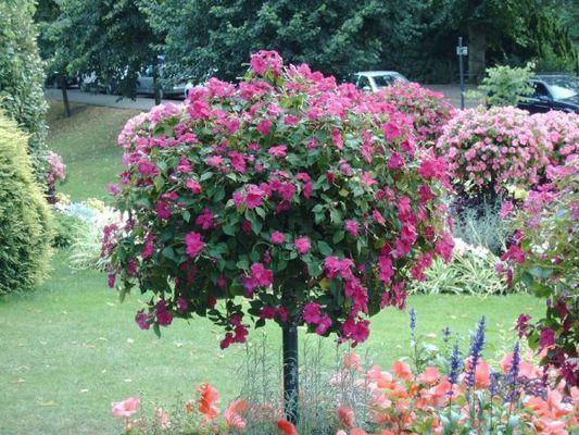 Blumen in Bath