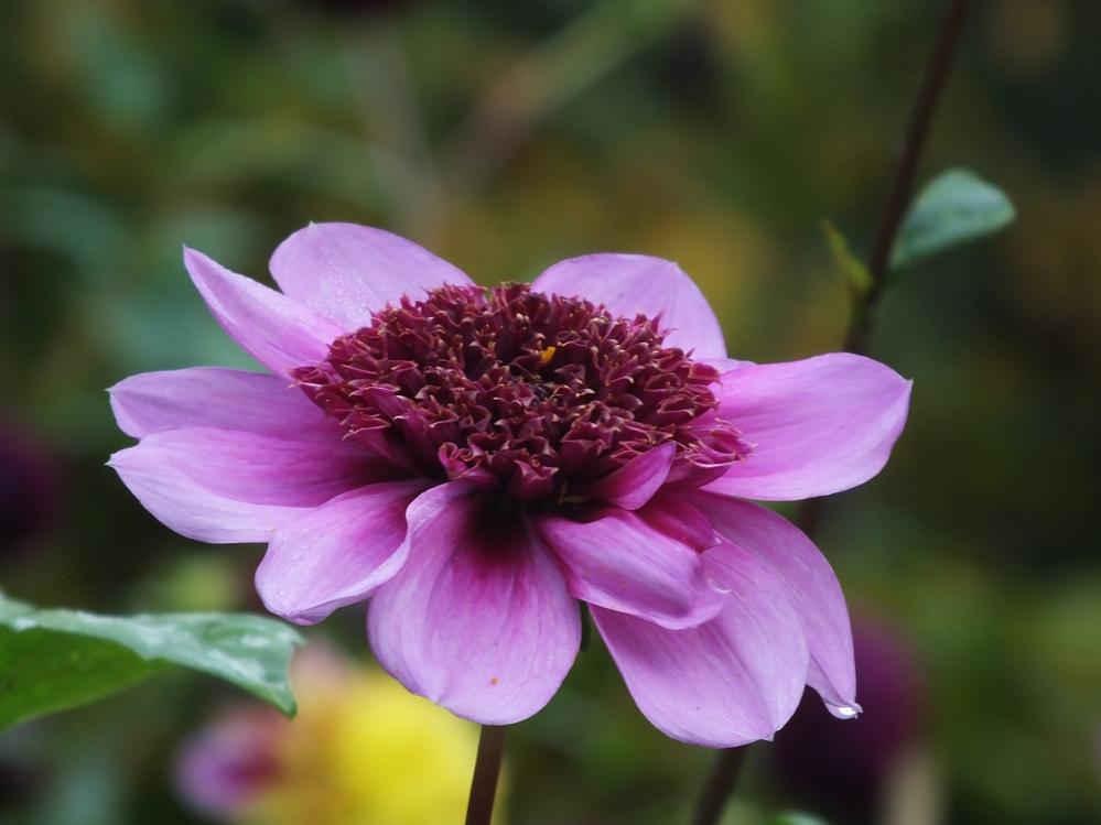 Blumen in Berlins Parks und Gärten 3