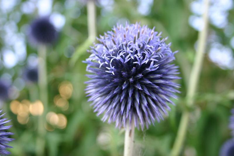 Blumen in Blau