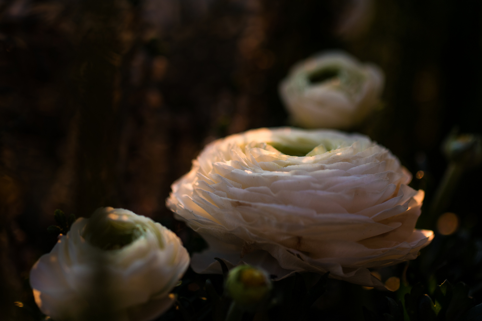 Blumen in der Dämmerung