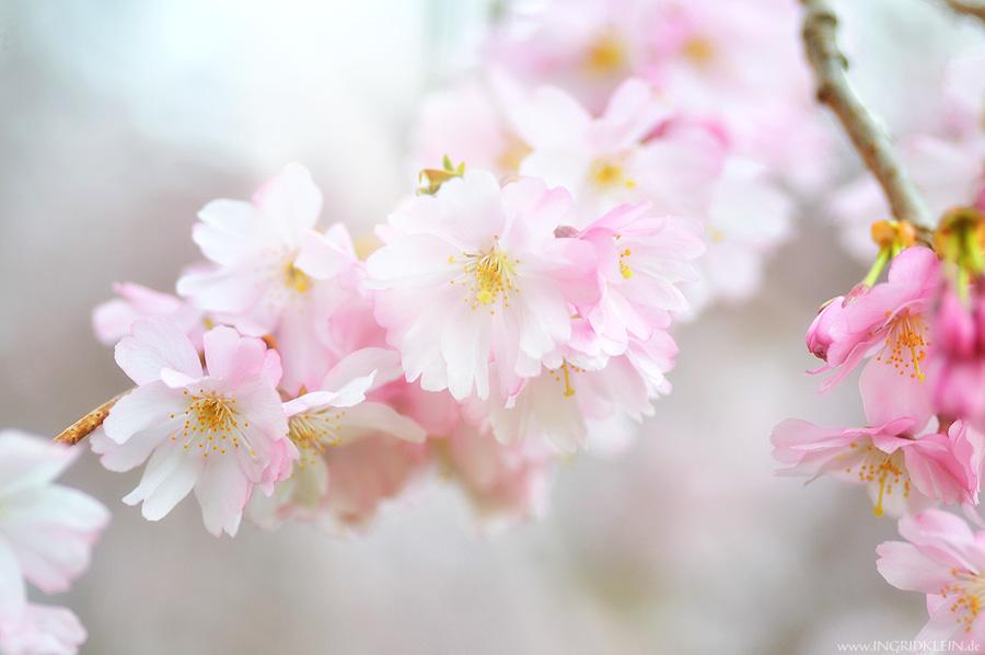 Blumen in rosé