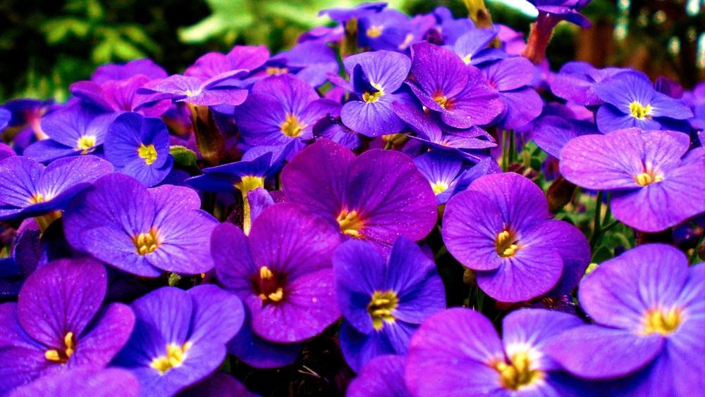 Blumen in voller Pracht