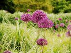 Blumen können nicht blühen ohne Wärme der Sonne...