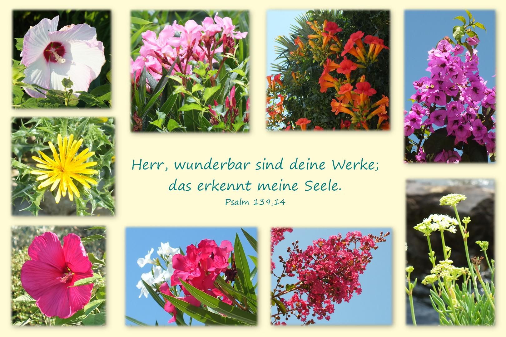 Blumen Kroatiens....Psalm 139,14