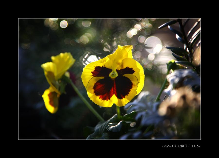Blumen Kübel Knipserei