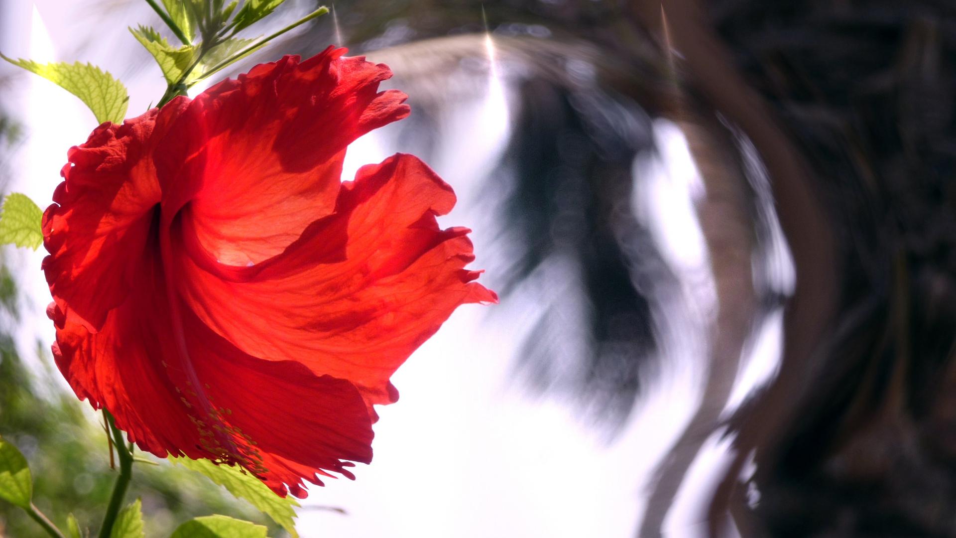 Blumen & Licht