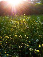 Blumen-Lichter