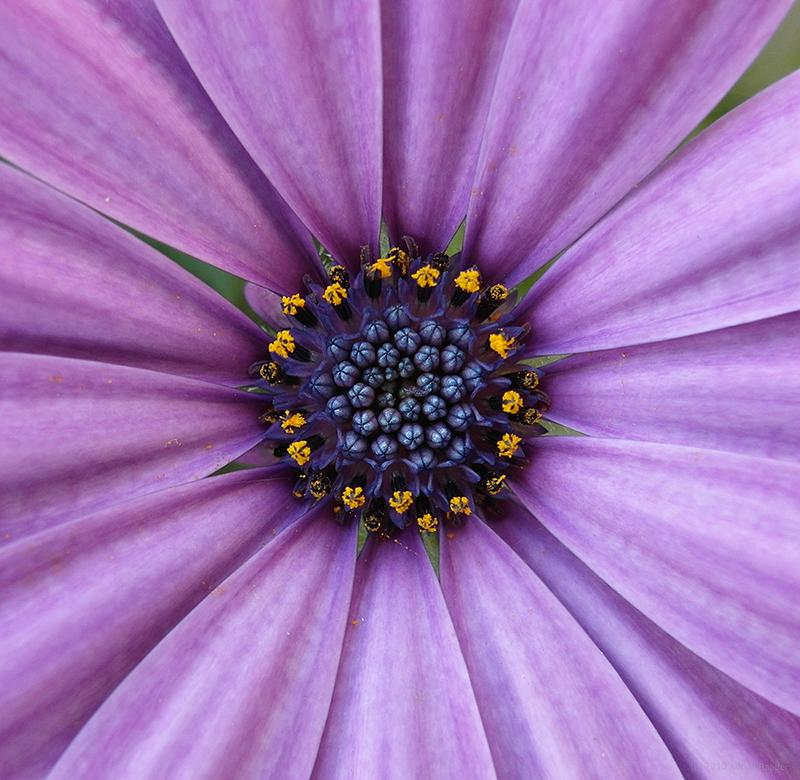 Blumen-Makro mit der EX1