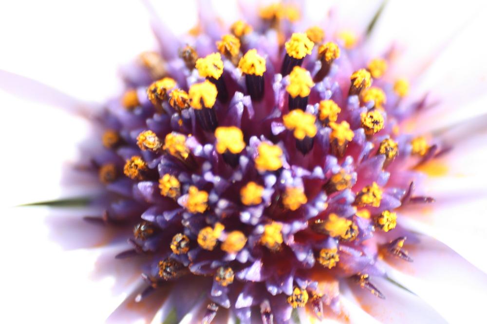 Blumen-Makroaufnahme