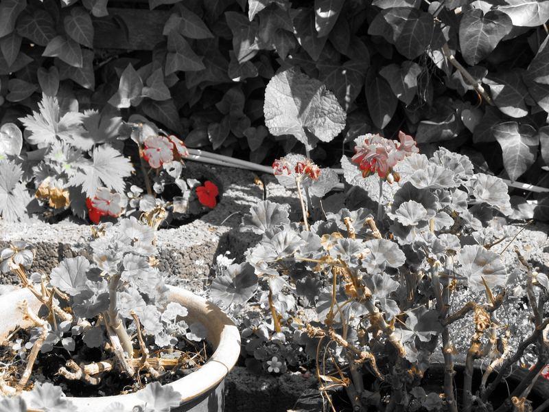 Blumen mal unbunt
