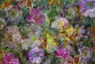 Blumen-Mix