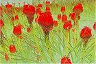 Blumen - Negativ und wieder etwas zurück