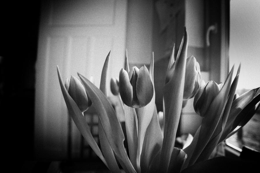 Blumen ohne