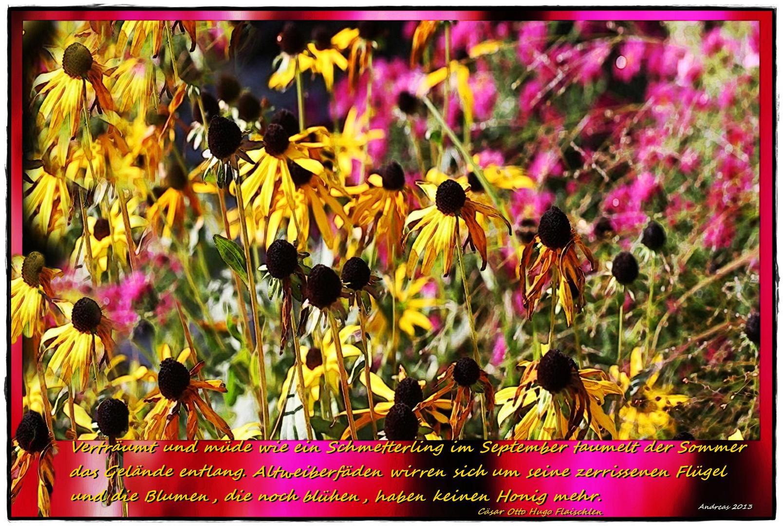 Blumen ohne Honig