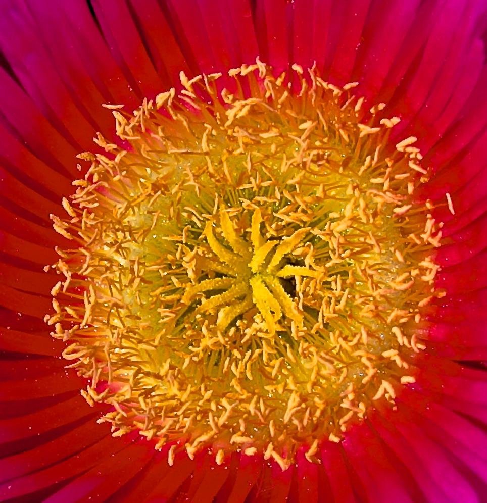 Blumen Pollen