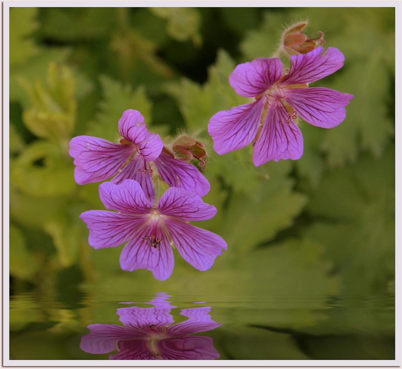 Blumen-Portrait