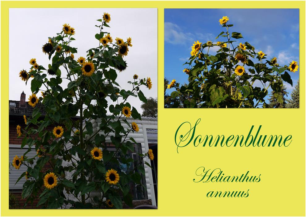 Blumen-Power in meinen Garten