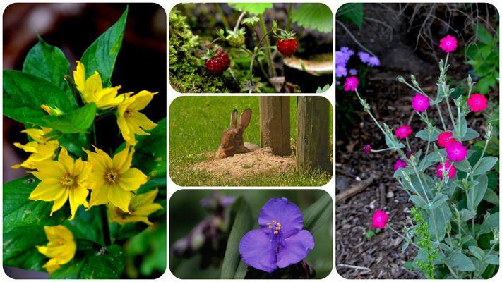 Blumen rund um unser Haus