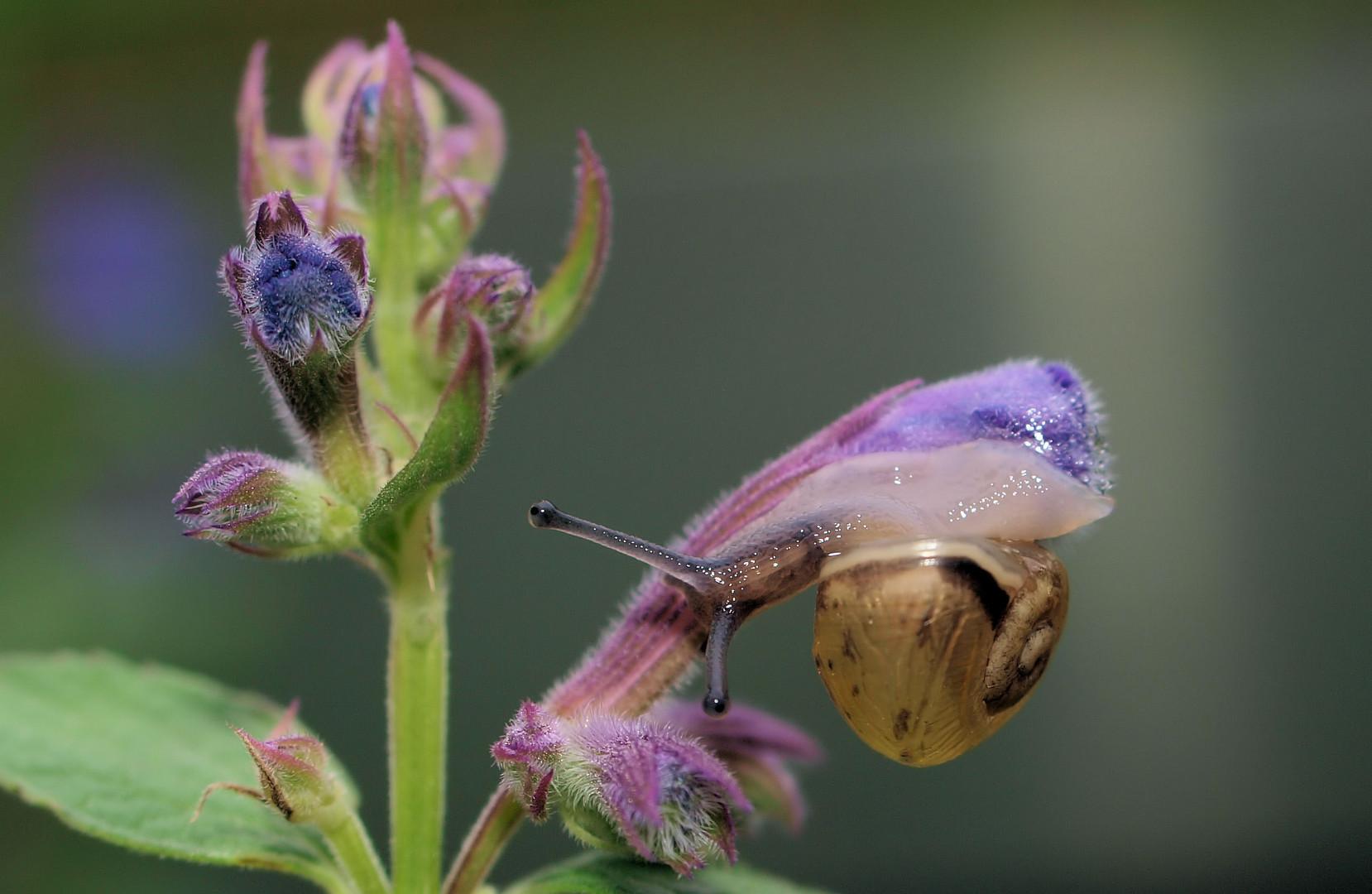 Blumen Schleimer