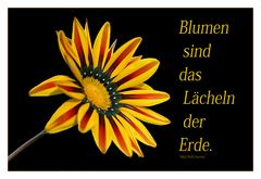 Blumen sind...........................