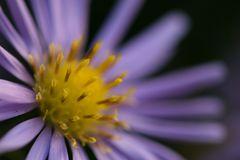 Blumen sind das Lachen der Erde!
