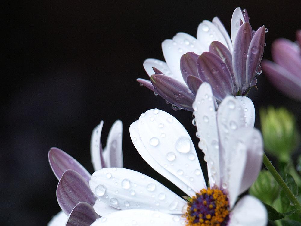 Blumen sind Frauensache?
