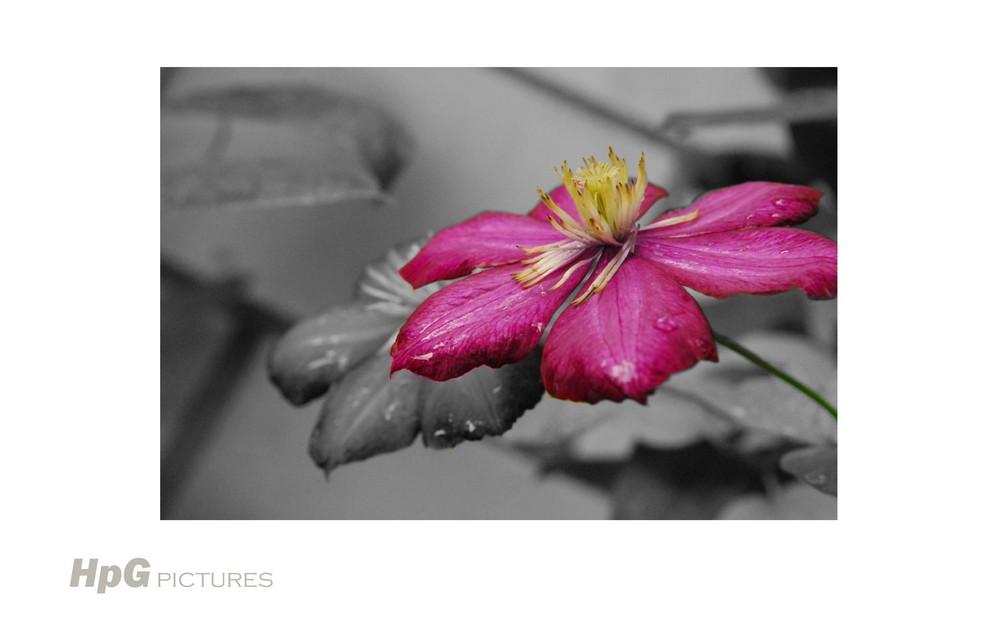 Blumen Spiel