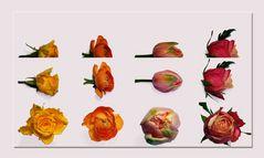 Blumen-Spielerei ...