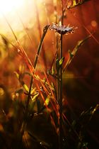 Blumen u. Pflanzen im Sonnenuntergang