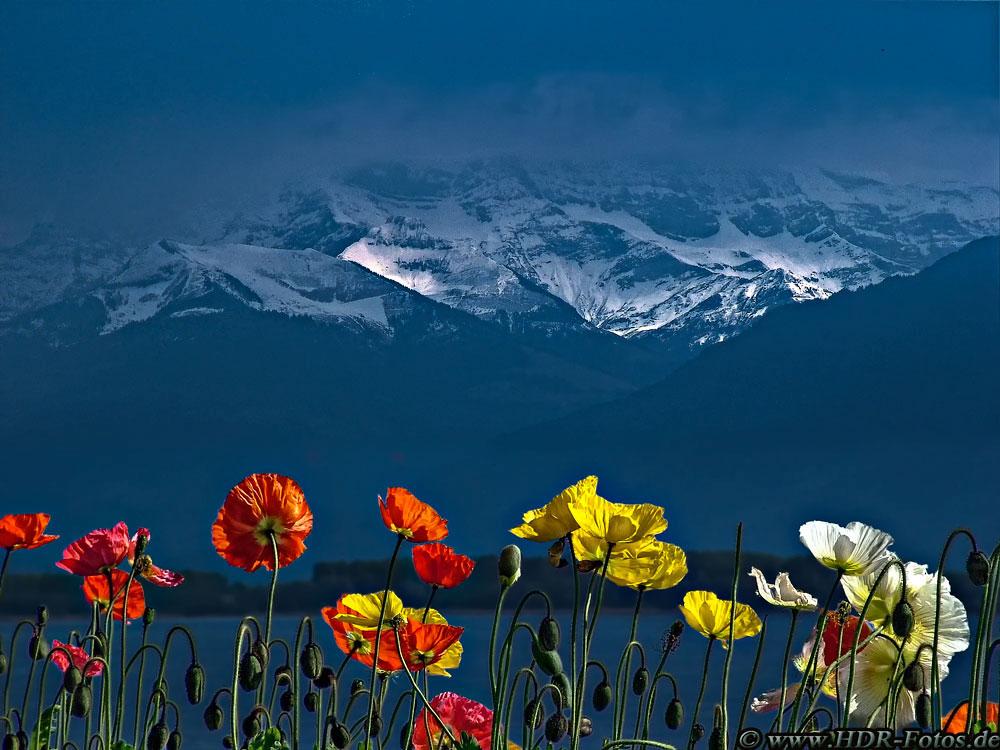 Blumen und Berge