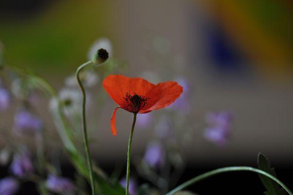 Blumen vom Straßenrand (1)