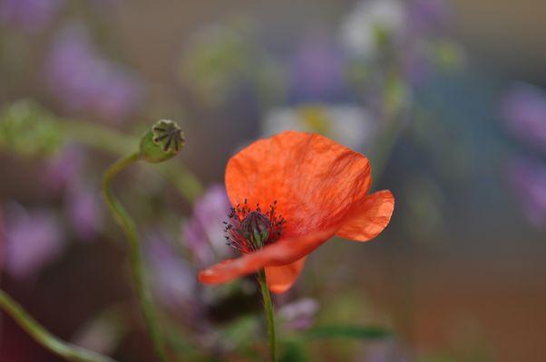 Blumen vom Straßenrand (3)