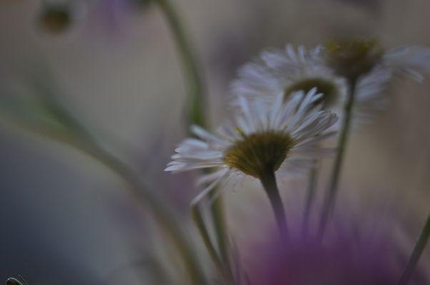 Blumen vom Straßenrand (4)