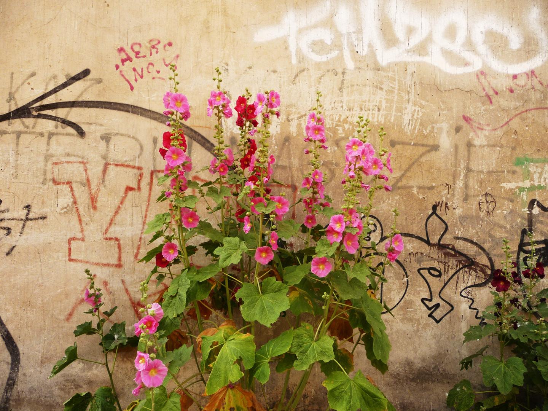 Blumen vor der Hauswand