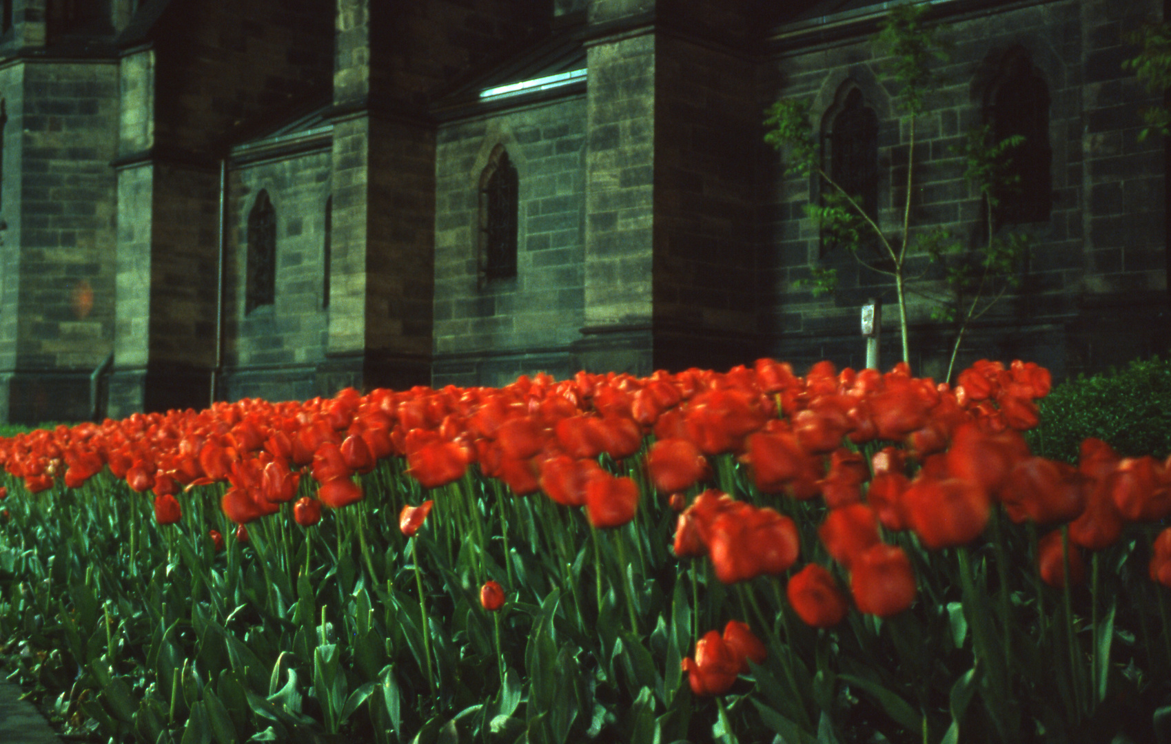 Blumen vor der Johanniskirche