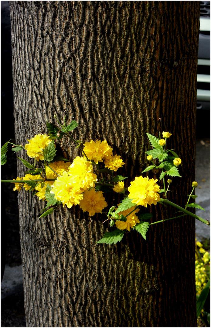 Blumen vorm Baumstamm