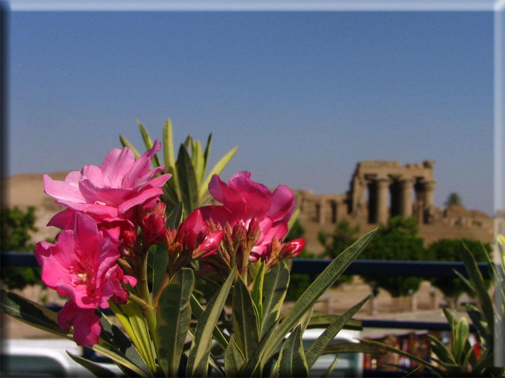 Blumen vorm Kom Ombo-Tempel..