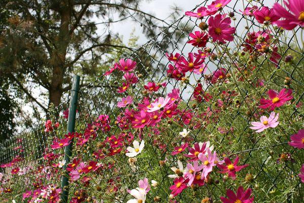Blumen vs. Maschendrahtzaun