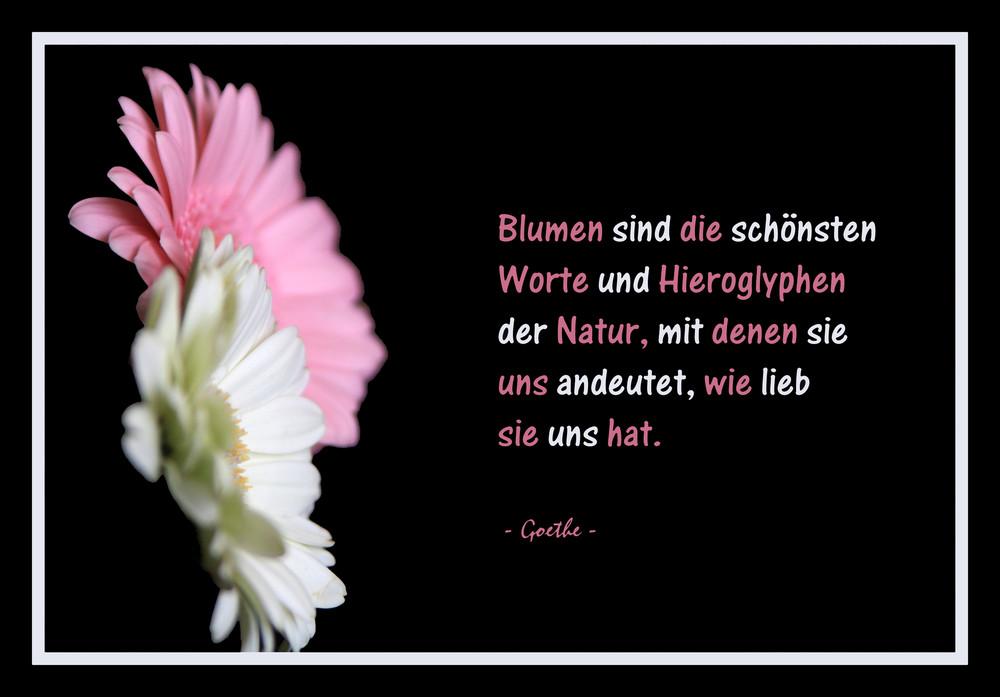 Blumen zitat foto bild pflanzen pilze flechten - Blumen zitate ...
